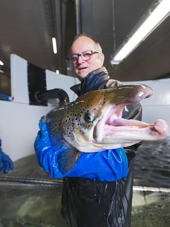 Malcolm Pye, CEO Benchmark plc i aksjon i Salten i september. Foto: Salmobreed.