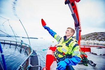 Røkter Sindre Nordskag håndfôrer fisken ved lokaliteten Espnestaren i Frøyfjorden. Klikk for større bilde. Illustrasjonsfoto: Måsøval fiskeoppdrett.