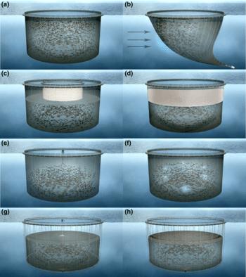 Bilde hentet fra: (Bui et al., 2017) der snorkelmerden er bilde C.  Klikk for større bilde.