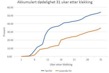 Den akkumulerte dødeligheten frem til 31 uker etter klekking viser at levende fôr gir lavere dødelighet. Kilde: C-feed/Tjeldbergodden Rensefisk.