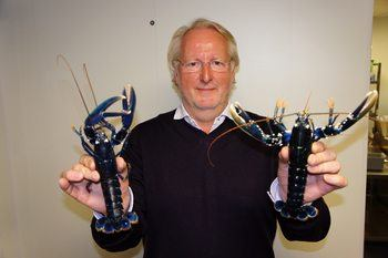 Gourmetkokk Eivind Hellstrøm med to hummere fra Norwegian Lobster Farm. Foto: Norwegian Lobster Farm