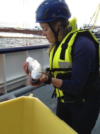 Aoife K.M. Westgård er veterinær ansatt i Aqua Kompetanse AS og medforfatter på artikkelen. Foto: Privat.