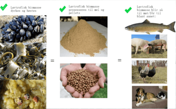 Lavtrofisk biomasse skal prosesseres til mel og pellets. Foto: AkvaTotal.