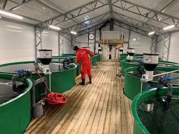 Akvafarm rensefisk produksjon foregår i totalt 20 kar og har ca. 150m3 karkapasitet. Foto: Akvafarm.