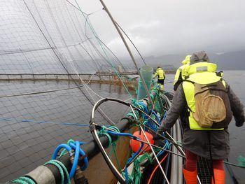 Det er viktig for selskapet å ivareta det gode ryktet om norsk laks. Foto: Fishency Innovation