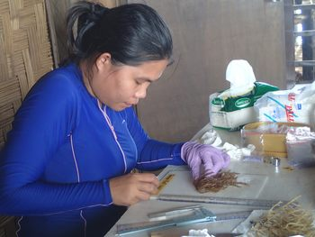 GlobalSeaweedSTAR researcher Rema Sibonga examines samples from a seaweed farm in Bohol, Philippines. Click on image to enlarge. Photo: Valeria Montalescot.
