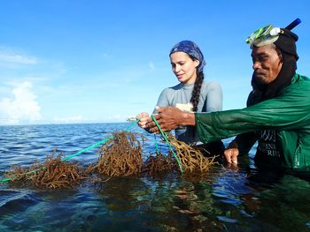 Dr Valeria Montalescot of SAMS helps harvest seaweed at a farm in Bohol, Philippines as part of GlobalSeaweedSTAR. Click on image to enlarge. Photo: Maria Luhan
