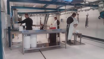 SalmoBreed Salten er et anlegg for stamfisk og produksjon av rogn. Fisken som det blir hentet rogn fra er omtrent 12 kg. Foto: Harrieth Lundberg