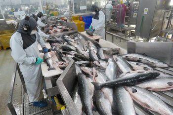 Multiexport Foods' processing plant in Puerto Montt. Photo: Salmonexpert.