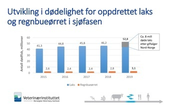 Utvikling i dødelighet for laks og regnbueørret i sjøfasen. Tabell fra Veterinærinstituttet.