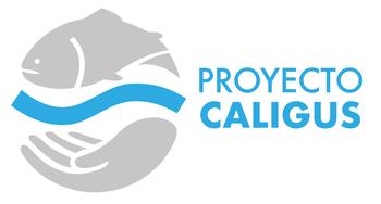 El proyecto Caligus comenzó el año 2013.