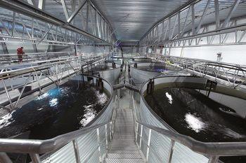 AKVA group estima que para los próximos 10 años se planean inversiones de instalaciones para salmón en tierra por más de US$ 16 mil millones.