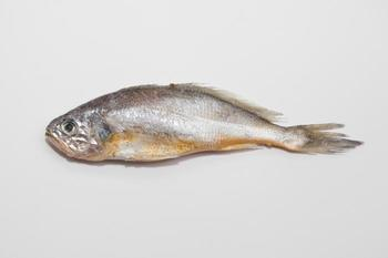 Yellow corvina (Larimichthys polyactis) will be farmed in the SSFF.