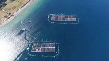 PSP Soluciones ha logrado proteger esta temporada a una biomasa de cosecha de salmón avaluada en US$420 millones. Foto: PSP Soluciones.