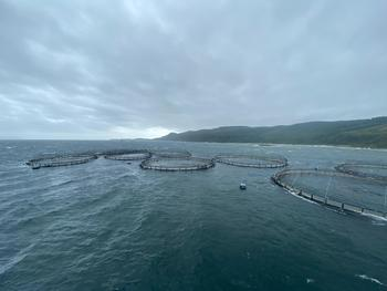 Mowi lost 48,834 fish when its North Carradale farm broke free from its moorings. Click on image to enlarge. Photo: Mowi.
