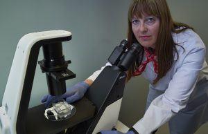 Smittemodeller er et nødvendig verktøy i Mettes arbeid som forsker i fiskehelse. Modellene skal i størst mulig grad ligne smitte slik det foregår reelt i et oppdrettsanlegg, slik at tiltakene som utvikles har effekt. Først gjør hun seg kjent med den parasitten eller bakterien hun skal bruke. Da er det mye uttestinger i lab med dyrking, vekst og oppformering med mer. Foto: Audun Iversen/Nofima
