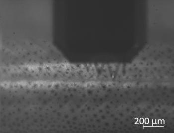 Nanoindentering brukt til å bestemme mekanisk styrke i slimoverflata på skinn hos lakseyngel. Foto: NTNU Institutt for bioteknologi og matvitenskap