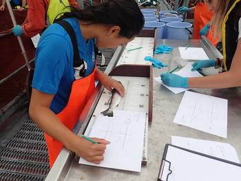 Samantha Bui registers where on the salmon body the lice are. Click on image to enlarge. Photo: Velimir Nola / IMR.
