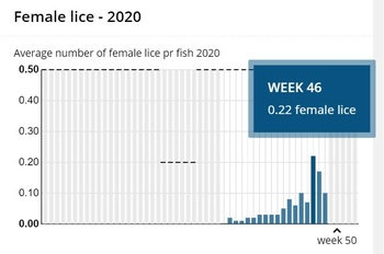 The lice count graph for Nordlaks' Ytre Hadseløya site, where the Havfarm is moored. Numbers peaked in week 46. Click on image to enlarge.