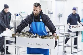 Norcod torskeprøver ankommer Danmark. Klikk for større bilde. Foto: Norcod.