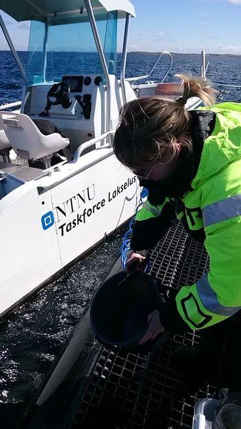 I havgapet: I arbeidet med doktorgraden var Lone Sunniva Jevne mye ute på laksemerdene på Frøya i Trøndelag. Foto: Taskforce lakselus NTNU.