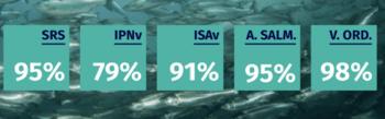 Eficacias de la vacuna pentavalente Fishvac 5S (Click para agrandar la imagen). Fuente: FAV.