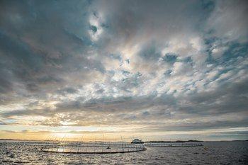 Selskapet har sine røtter fra en liten grend ytterst på Frøya, og har over år vokst til å bli en betydelig aktør i oppdrettsnæringen i Midt Norge og på Island. Foto: Maverix