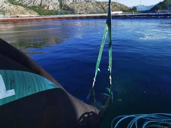 Yngelen blir overført til sjø. Foto: Norcod