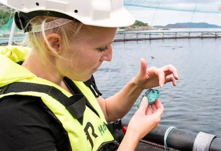 Driftstekniker Helene Knapstad på lokaliteten Gjerdinga med en rognkjeks som ble med opp i håven ved den ukentlige lusetellingen. Foto: SinkabergHansen.