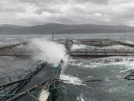 Det blåser godt på merdkanten hos E.Karstensen denne fredagen. Foto: Kristoffer Karstensen.