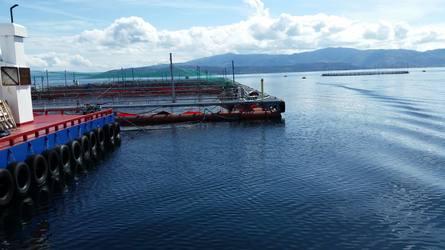 Bilde tatt fra inspeksjoner gjort på merdkanten. Foto: Synfaring.
