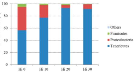 Imagen 1: Abundancia relativa (%) de los phylum bacterianos más prevalentes en los distintos grupos. Fuente: modificado de Romoldi y col., 2019.