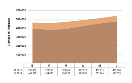 Gráfico 4. Biomasa Mensual Cultivada en Centros Marinos 2018-2019 (a Junio) en Toneladas. Fuente: Sernapesca.