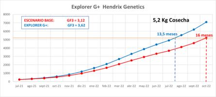 Proyección del potencial de crecimiento, para su producto EXPLORER G+ en Magallanes. Gráfico: Hendrix Genetics.