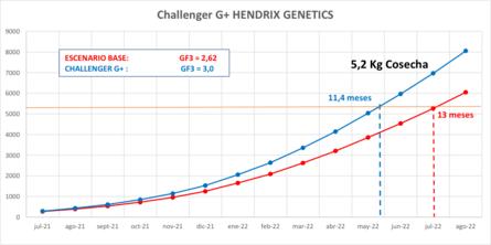 Proyección del potencial de crecimiento, para su producto CHALLENGER G+ en las regiones de Los Lagos y Aysén. Gráfico: Hendrix Genetics.