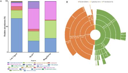 Análisis de microbiota asociada a C. rogercresseyi en distintas zonas de Chile destinadas a la producción de salmón. A) Diversidad bacteriana de C. rogercresseyi en las regiones de Los Lagos, Aysén y Magallanes. B) Core bacteriano de C. rogercresseyi.