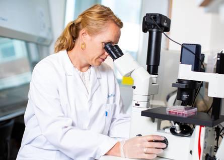 Forsker Tone-Kari Østbye studerer fettceller i mikroskop. Foto: Joe Urrutia / Nofima.