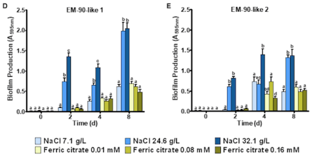 Formación de biofilm en P. salmonis cultivadas bajo diferentes concentraciones de NaCl y citrato férrico. Cuantificación de biofilm de P. salmonis EM-90-like 1 (D) y tipo EM-90-like 2 (E)  cultivados durante 0, 2, 4 y 8 días. Los valores se presentan como la media ± SEM (n = 5). Letras distintas indican diferencias significativas (p <0,05). Imagen: Santibañez y col., 2020.