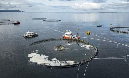 Dronebilde av Atlantis merden til SinkabergHansen. Foto: Tina Oldham/Havforskningsinstituttet