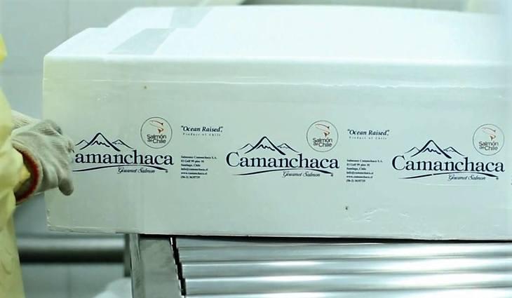 Camanchaca baja sus estimaciones de cosecha de salmón Atlántico