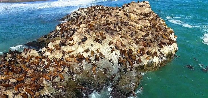 Subpesca rechaza entregar concesiones de salmón en Biobío y Ñuble