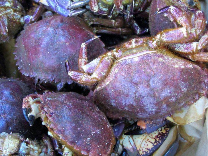Antiparasitarios afectan negativamente a crustáceos de vida libre