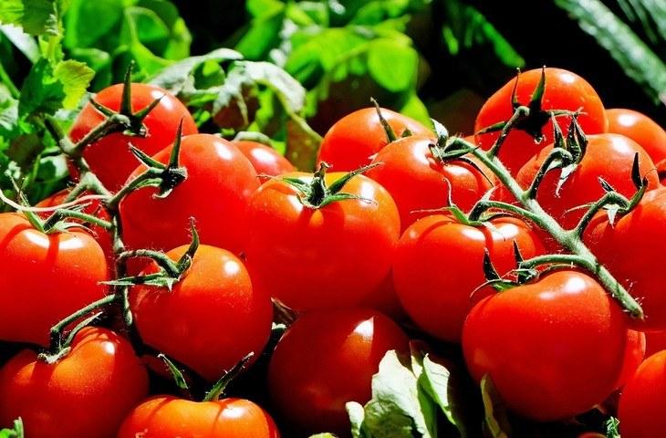 Licopeno: nuevo antioxidante para conservación de filetes de trucha arcoíris