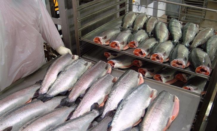 Levantan prohibición de operar a planta de Salmones Antártica con condiciones
