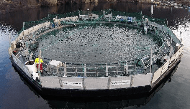 Salmon farmer buys 1m-smolt floating closed cage