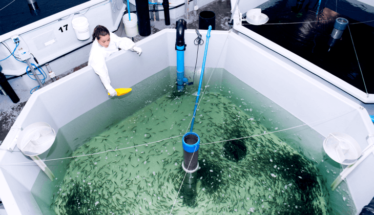 Benchmark hatches £19m joint venture with AquaChile