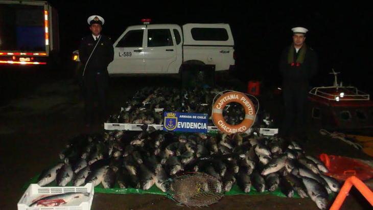 Salmonchile implementará fiscalía interna para investigar robos de salmón