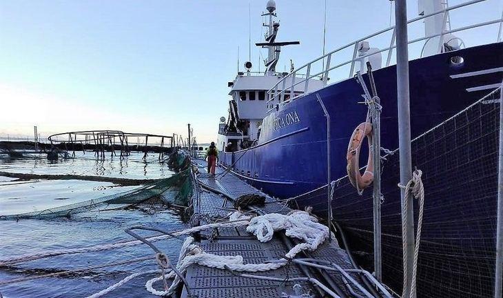 Marine Harvest claims 27% recapture after mass escape