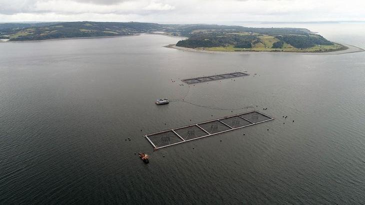 "Multisindical: Aprobación de captura de salmones escapados ""potenciará proliferación de mafias"""
