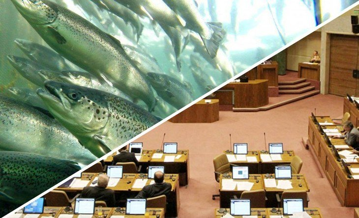 Salmonicultoras deberán presentar planes para recuperar fondos marinos